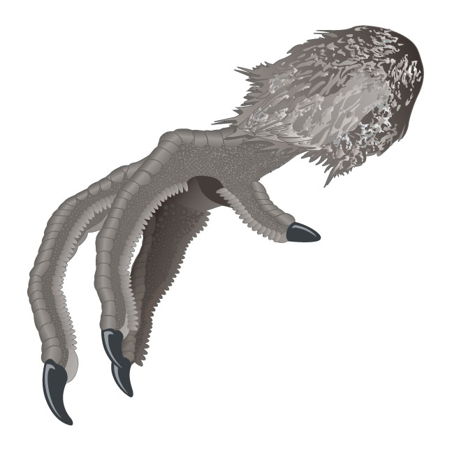 Grouse foot