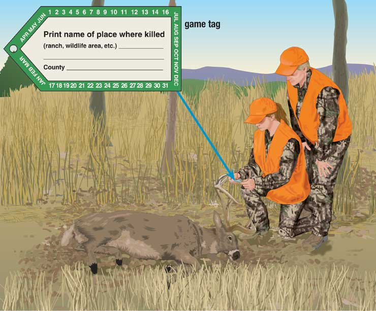 Hunter attaching game tag
