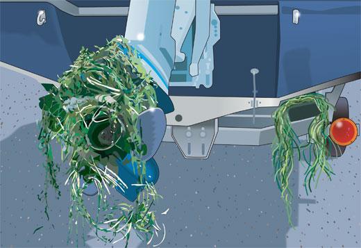Aquatic nuisance plants