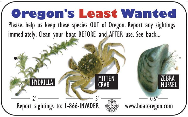 Wear-It Oregon Logo