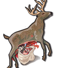 Step 6 of field dressing a deer: Slice through the diaphragm—a thin layer of tissue that holds the entrails to the ribs—freeing the intestines.