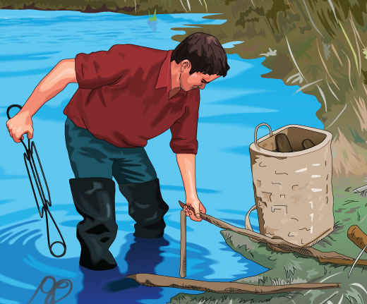 Trapper setting a trap for beaver