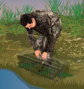 Trapper checking a trap