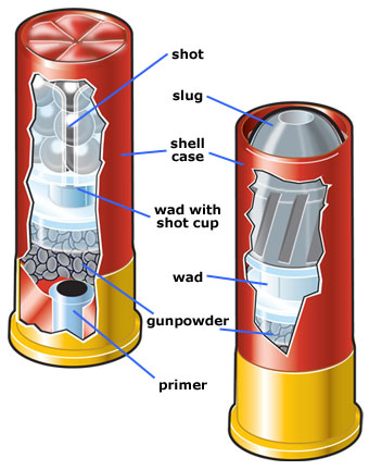 Cutaway view of shotshells