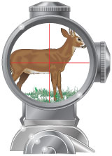 Telescopic sight with crosshairs