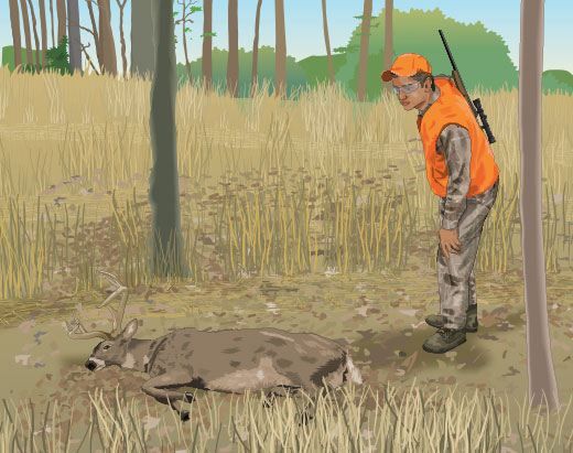 Hunter approaching a downed deer