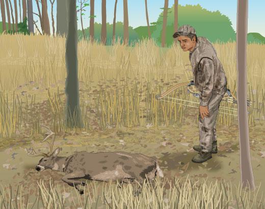 Approaching downed deer
