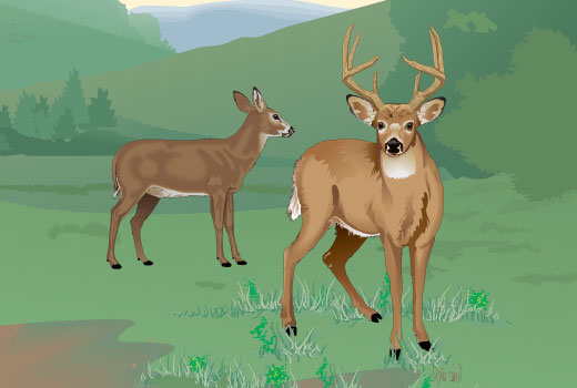 Buck and doe
